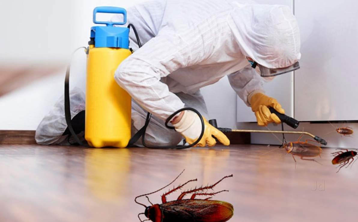 Pest control and fumigation service in, Lagos Nigeria